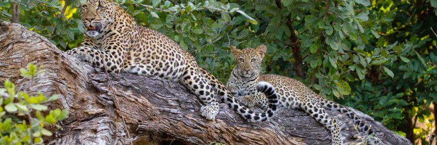 The Africa Safari Co.