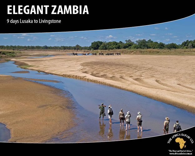 Elegant Zambia
