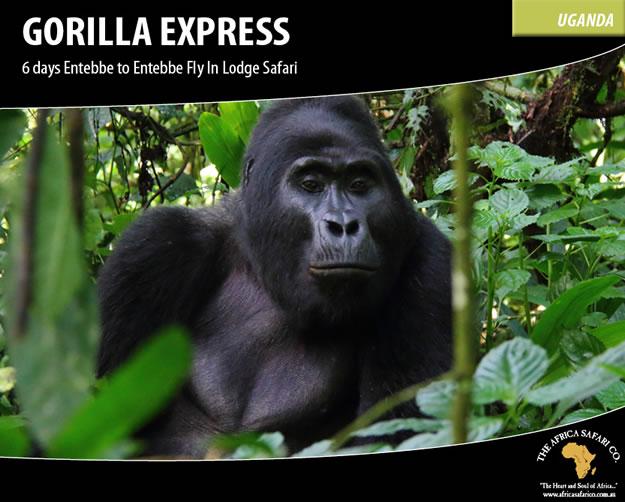 Gorilla Express