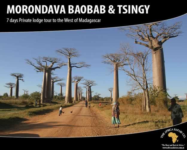 Morondava Baobab & Tsingy