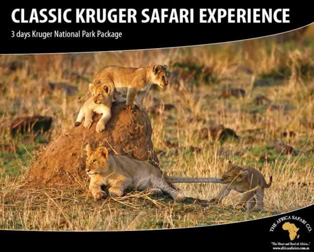 Classic Kruger Safari Experience