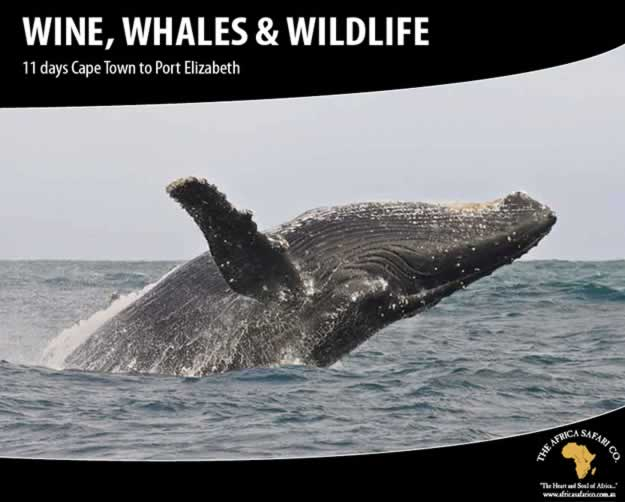 Wine, Whales & Wildlife