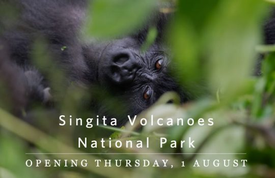 Singita Volcanoes NP – Opens 01/08/19