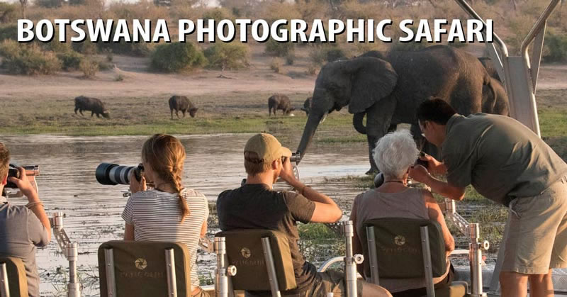 Botswana Photographic Safari 2020