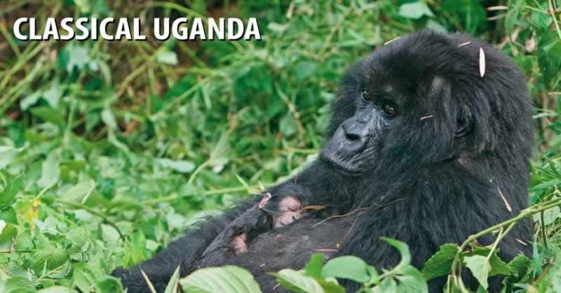 Classical Uganda