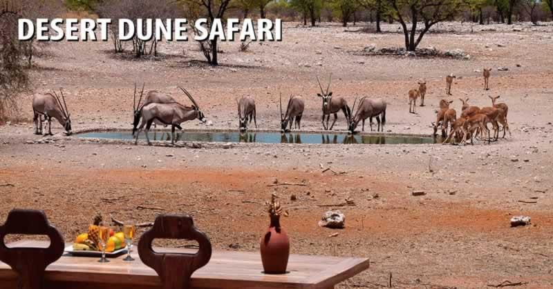 Desert Dune Safari