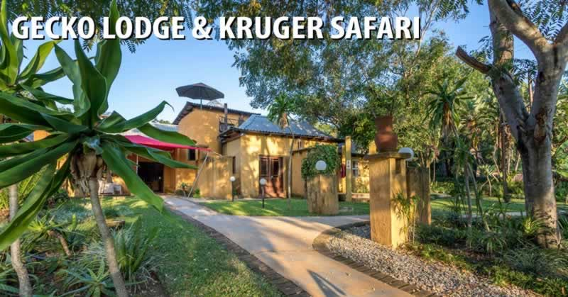 Gecko Lodge & Kruger Safari