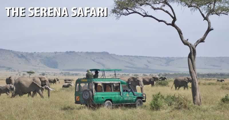 The Serena Safari