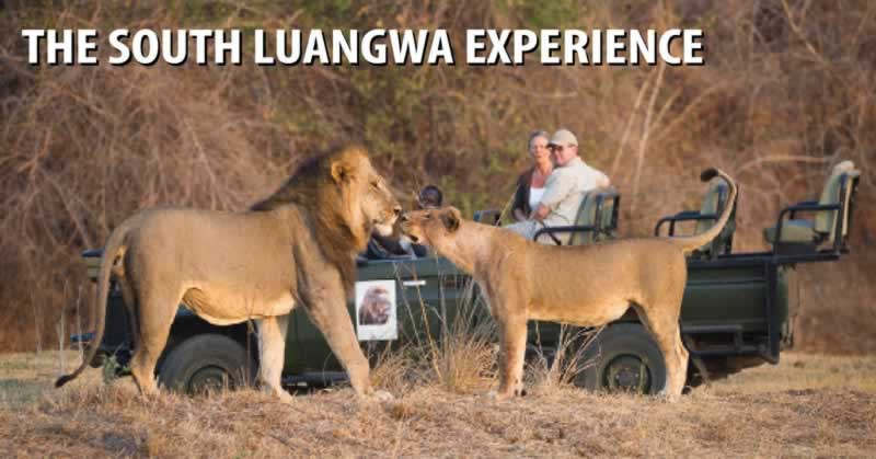 The South Luangwa Experience