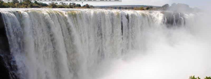 Waterfall & Wildlife