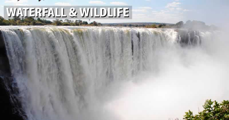 Waterfall and Wildlife