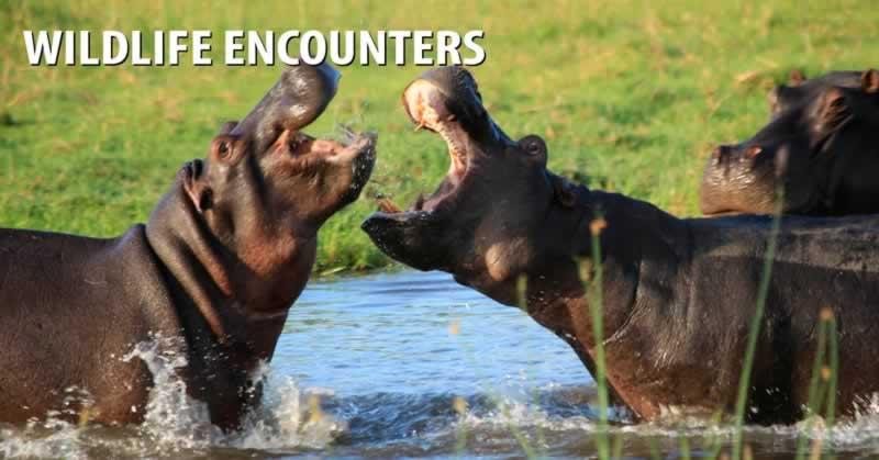 Wildlife Encounters