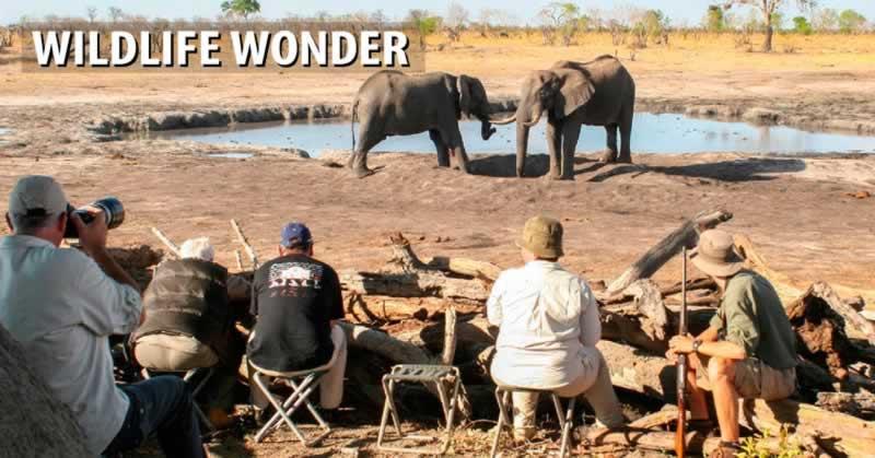 Wildlife Wonder