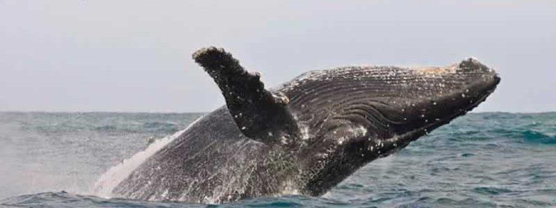 Wine, Whales & Wildlife