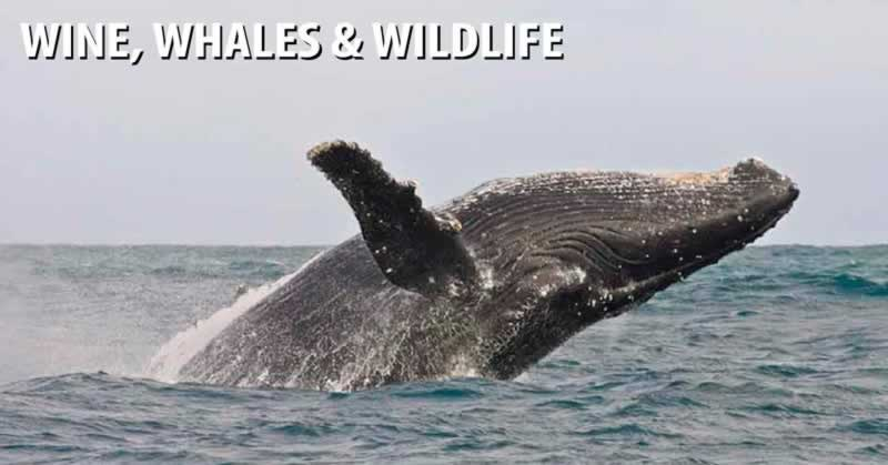 Wine Whales & Wildlife