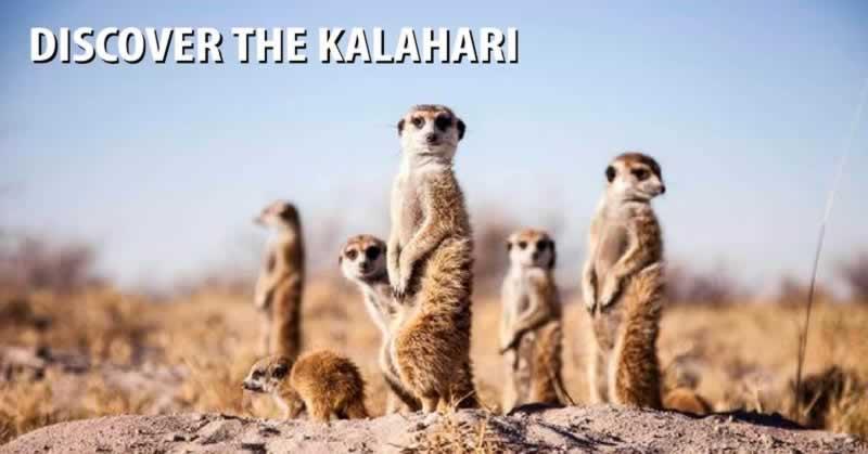 Discover the Kalahari