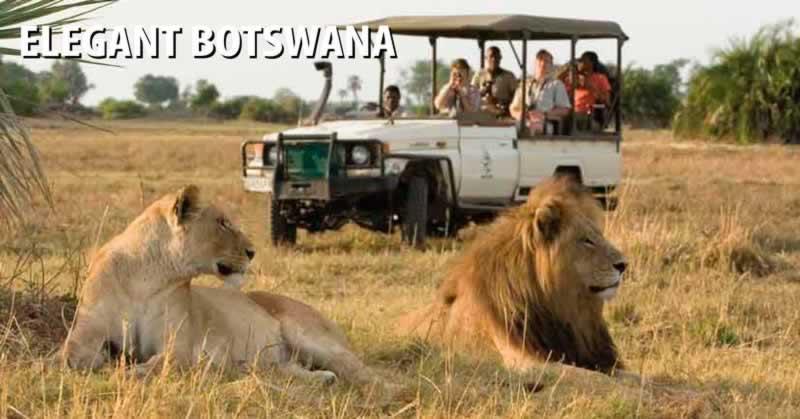 Elegant Botswana