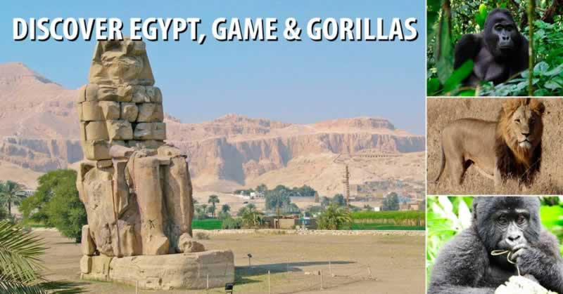 Discover Egypt, Game & Gorillas
