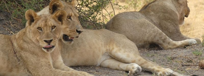 The Thrill of a Safari in Chobe National Park