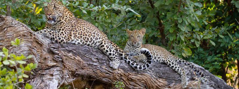 Zambia Photographic Safari