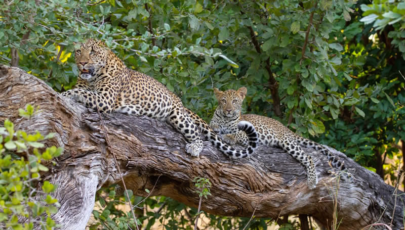 Zambia Photographic Safari - Blog