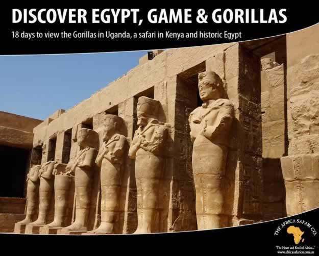 Discover Egypt, Game & Gorillas