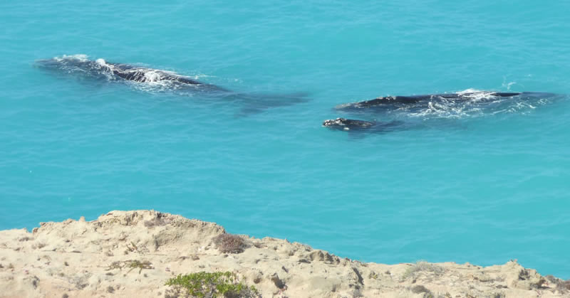 Head of Bight Whale Watching