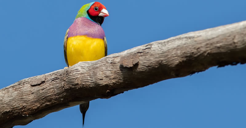 Tropical Outback Top End Bird Photography Tour