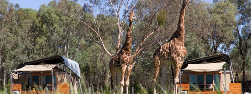 Wine & Wildlife Safari