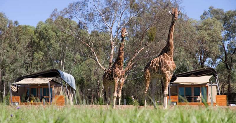 Wine and Wildlife Safari