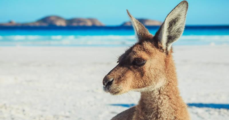 Great Australia Wilderness Tour