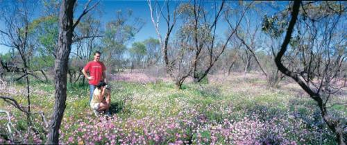 Couple in everlastings near Mingenew<br>Credit: Tourism Western Australia