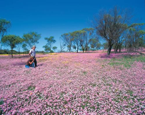 Couple in pink everlastings<br>Credit: Tourism Western Australia