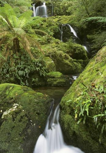 Cascades at Barrington Tops National Park.<br>Credit: Jeffrey Drewitz; Destination NSW