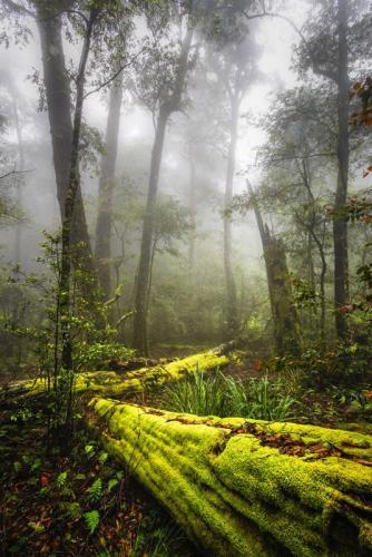 Barrington Tops National Park<br>Credit: Destination NSW