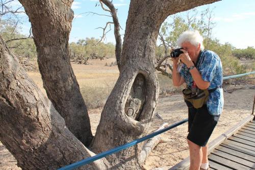 Burke & Wills Dig Tree
