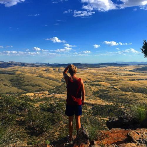 Flinders Ranges dutchemans stern