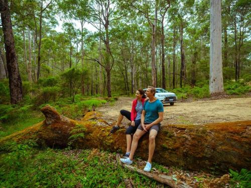 Karri Forests South West WA