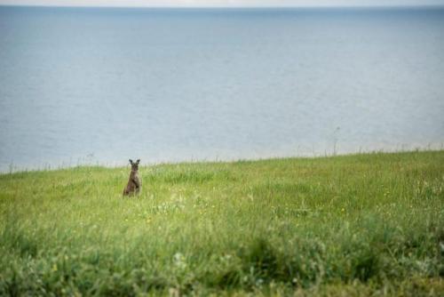 Oceanview Eco Villas - Kangaroo