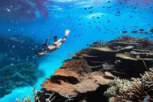 Orpheus Island Snorkeling -Photographer: James-Vodicka