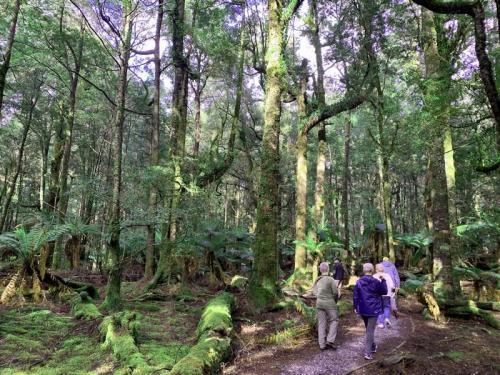 Walking through the Tarkine Wilderness
