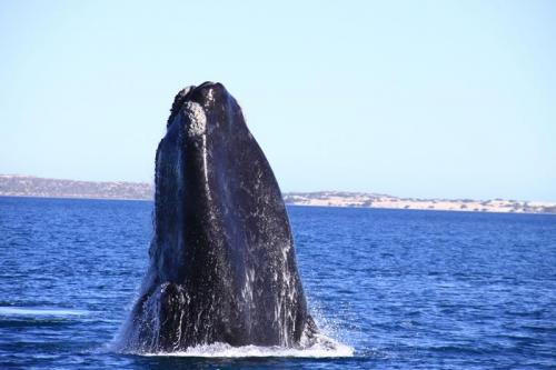Whale EP Cruises