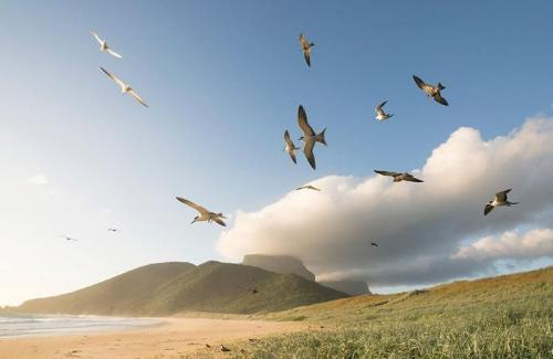 arajilla landscapes blinkies beach turns