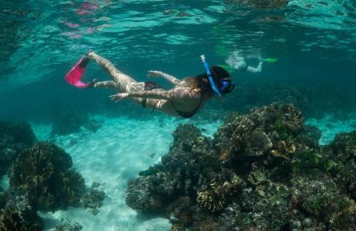 arajilla landscapes snorkelling underwater