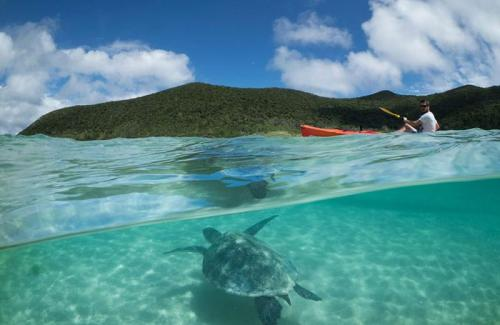 arajilla landscapes turtle kayak