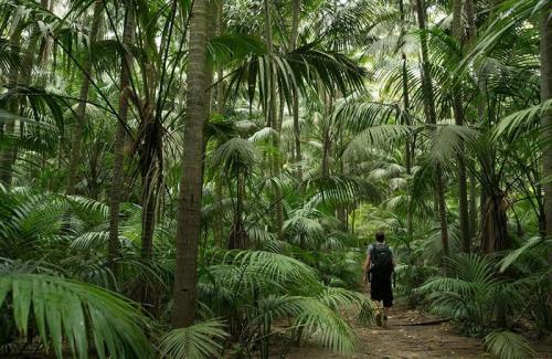 arajilla rainforests walk