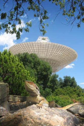 Tidbinbilla Deep Space Tracking Station + Lizard