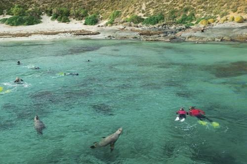 swim sealions dolphins